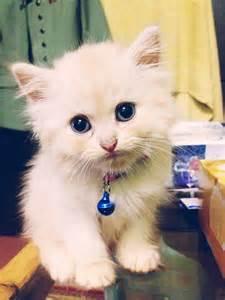 Cinta Untuk Anak Kucing so buat kucing cinta manis 2 ekor anak kucing