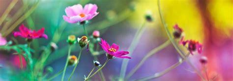 imagenes de flores bonitas para portada portadas con flores para facebook banco de im 225 genes gratis