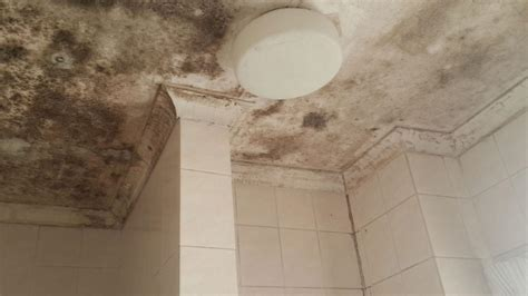 bathroom mould mold mildew removal in randburg