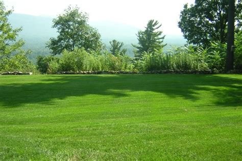 backyard lawn home kirkland s lawn yard servicekirkland s lawn