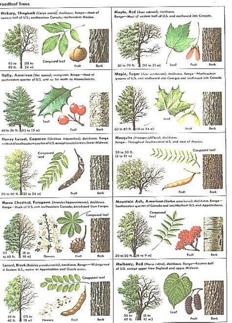 how to identify fruit trees by leaf the world s catalog of ideas