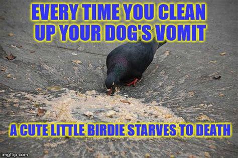 vomit meme puke meme 28 images puke memes best collection of