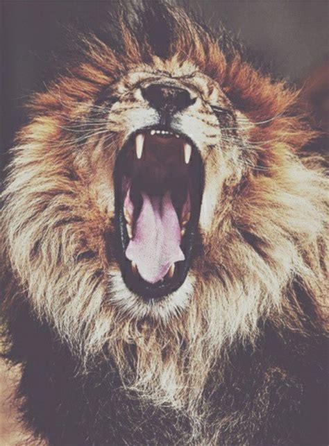 imagenes hipster animales animal animals grunge hipster king lion tumblr