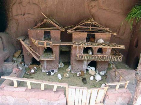 Guinea Pig Houses by Cool Guinea Pig Cage Pets Guinea Pig House Guinea Pig