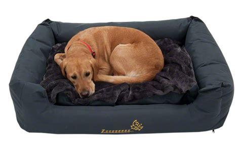 cuscini per cani grandi cucce per cani idee per tutte le taglie animali pucciosi