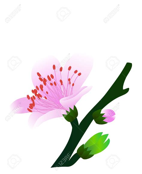 fiori di pesco disegni pesco clipart clipground