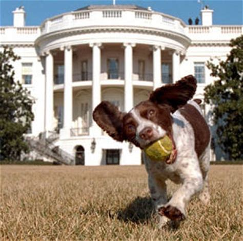 presidential dogs president dogs the 20 most recent presidential pooches other pets