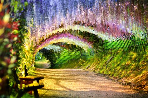 wisteria flower tunnel 12 fantastic tree tunnels around the world which leads you
