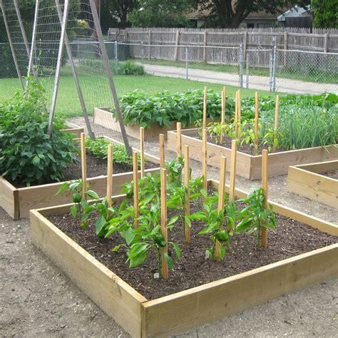 Raised Bed Vegetable Gardens Beginners The Garden Beginner Vegetable Garden