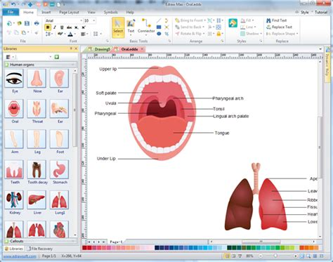 free scientific drawing software vector human organs illustration