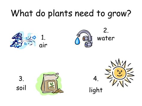 what of light do plants need 1st grade review of plants ppt