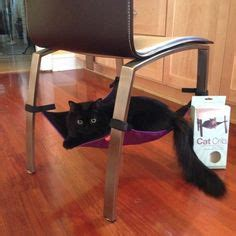 kitties  cat cribs images   cat hammock cribs hammock