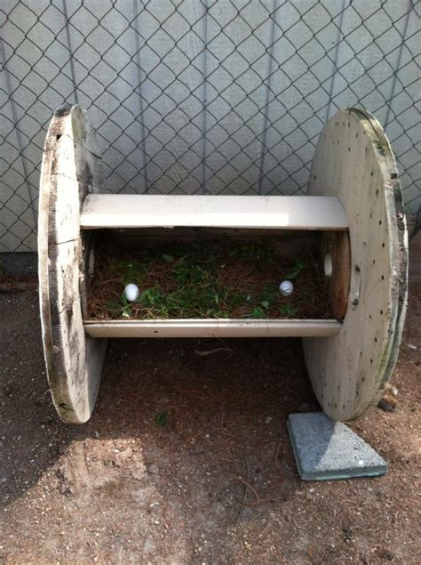 dog house electrical box 17 best images about spool chicken coops on pinterest electrical spools dog houses