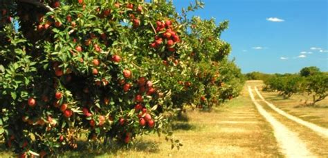 you can tell a tree by the fruit it bears put up your axe and plant fruit trees ministry127