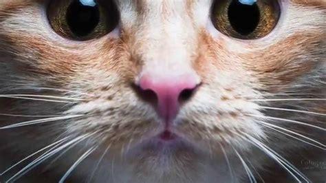 le pondremos un bigote 8498259703 por qu 233 nunca debes cortarle los bigotes a un gato youtube