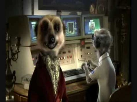 compare the meerkat house insurance compare the meerkat advert all in one compare the market