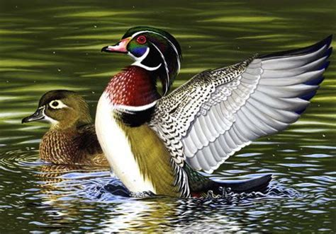 62 best North American Duck & Goose Species images on