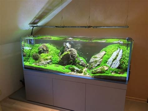 aquarium design x 3532 best aquarium images on pinterest fish aquariums