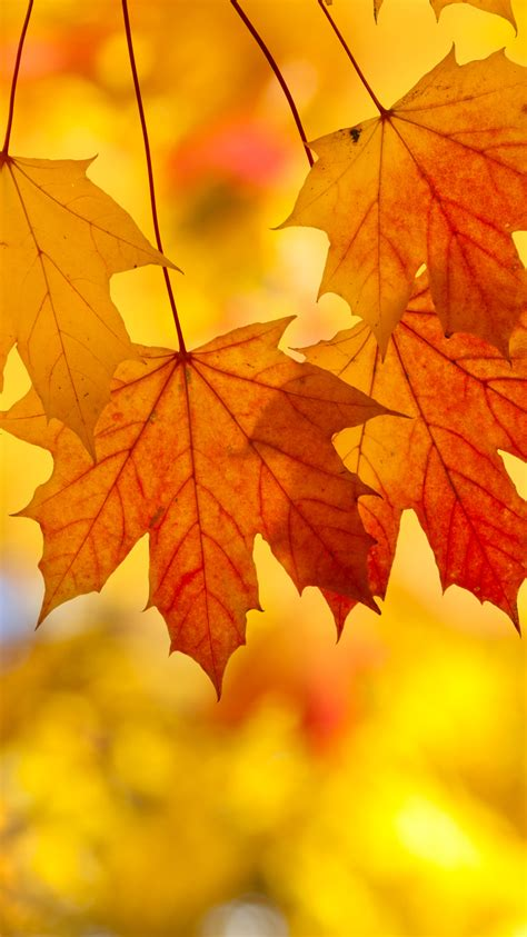 wallpaper for iphone leaves fall leaves iphone background wallpapers gallery