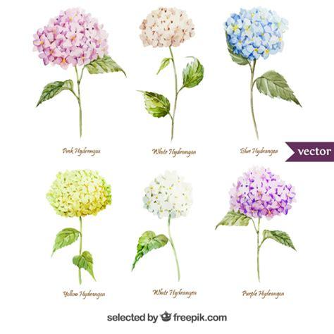 varietà fiori variet 224 di fiori di ortensia acquerello scaricare