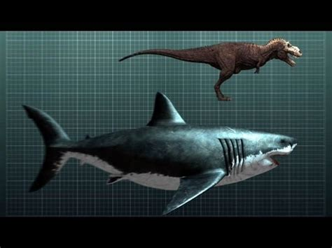 dinosaurus film izle carcharocles megalodon dinopedia the free dinosaur