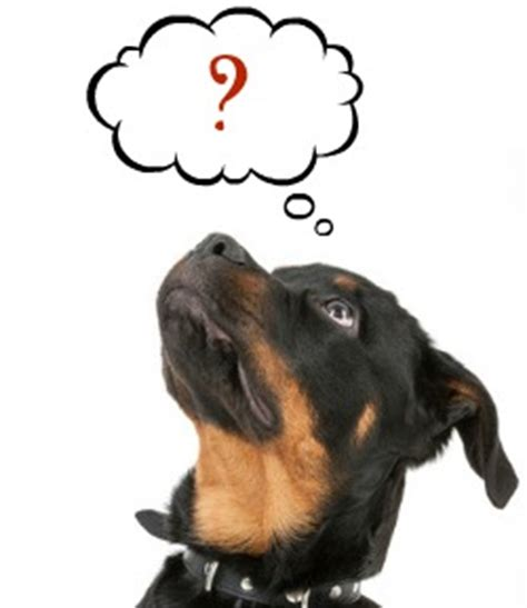 rottweiler allergies about canine allergies a of rottweilers