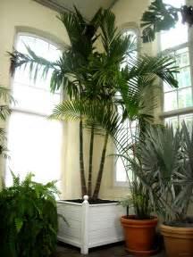 indoor palms indoor plants ferns pinterest