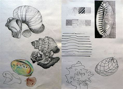 sketchbook drawings an exceptional international gcse sketchbook shells