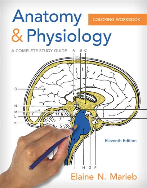 anatomy coloring book pearson marieb brito anatomy and physiology coloring workbook