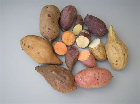 Potato Gene by Researchers Find The Genome Of The Cultivated Sweet Potato