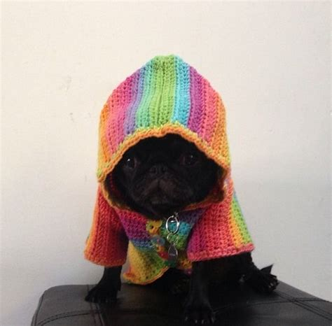 rainbow pug 17 best images about pugster on pug fawn pug and puppys