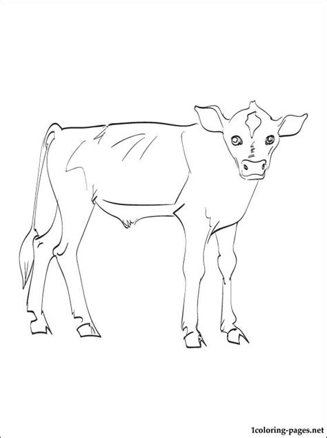 calf coloring page coloring pages