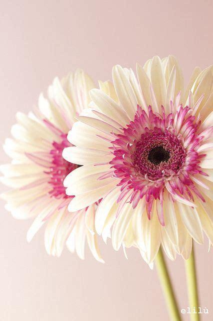 imagenes de flores turquesas 17 meilleures id 233 es 224 propos de tatouage de marguerite
