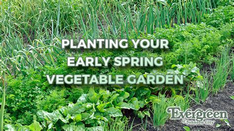 Evergreen Home Decor Planting Your Early Spring Vegetable Garden Evergreen Of
