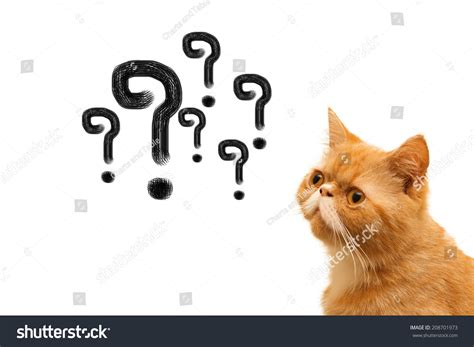 Thinking Cat Questions Mark Above Against Stock Photo