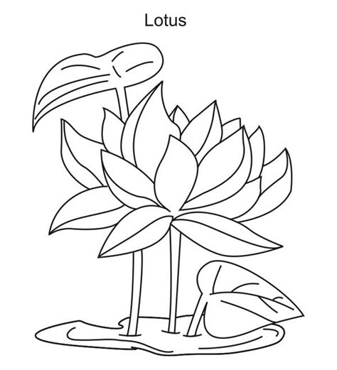 lotus flower growing lotus flower lotus flower growing coloring page
