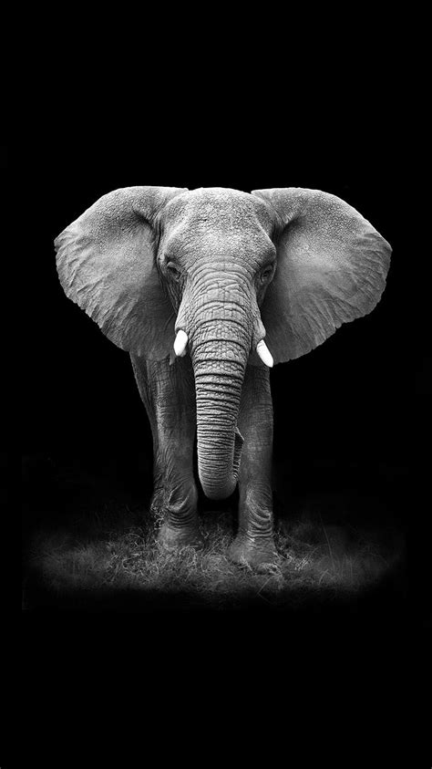 black and white elephant wallpaper tap and get free app an elephant on a black background