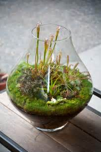 terrarium archives lila b design