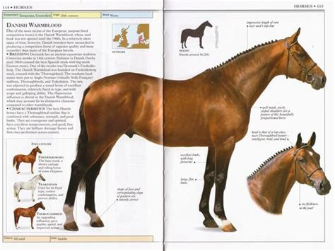 on horsemanship books 17 images about razas de caballos on real