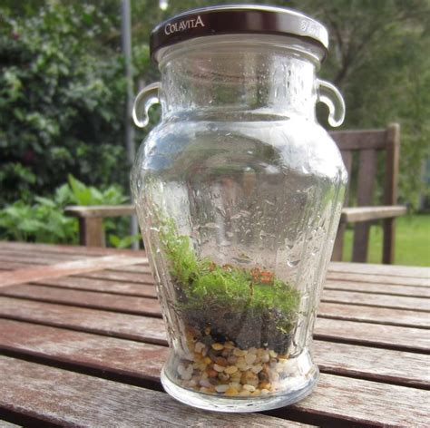 sealed bottle garden the basics of closed jar terrariums