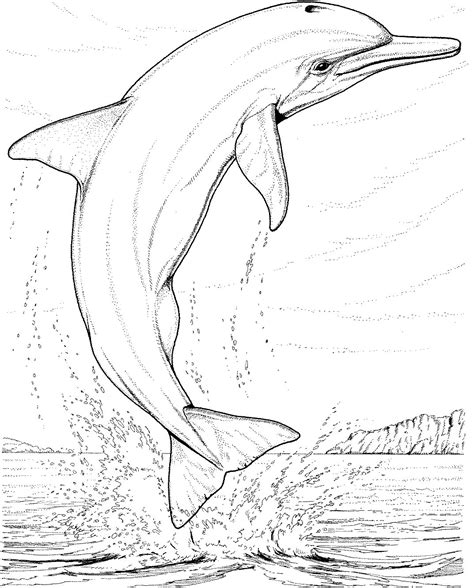 free coloring pages of dolphins dolphin coloring pages