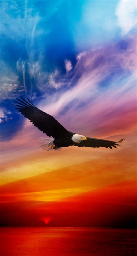 wallpaper iphone eagle flying eagle iphone wallpapers mobile9 bird nature