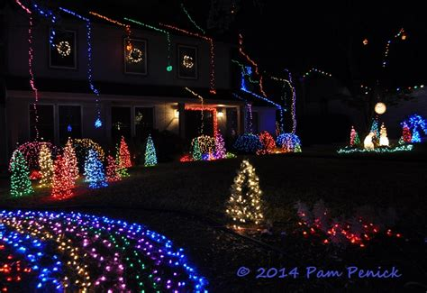 christmas light blue bushes light nets for bushes pictures to pin on pinsdaddy