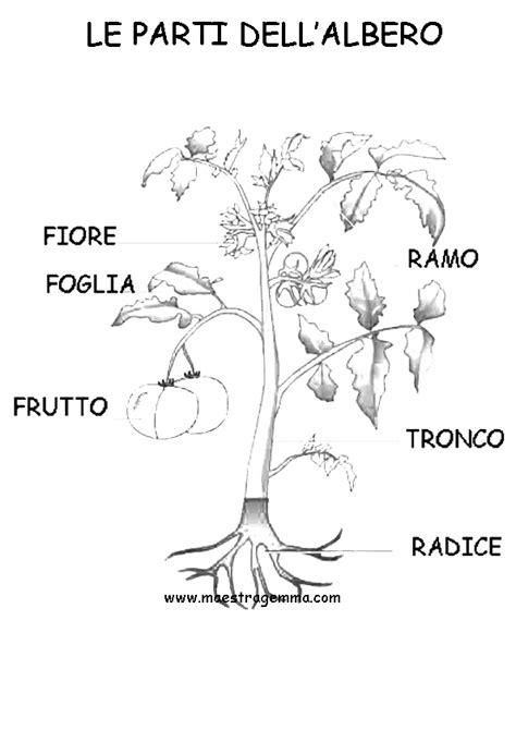 le parti fiore da colorare i diversi tipi di radice la semina le parti fiore