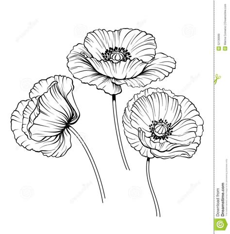 Papaveraceae Poppy Flower Coloring Coloring flowers black and white clipart coloring page poppy flower