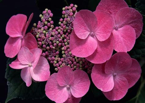 fotos para fondo de pantalla flores estas fotos de flores para fondo de pantalla es para ti