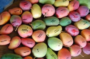 Mango varieties vary greatly in shape size color and flavor