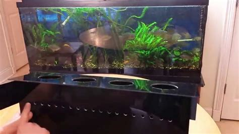 indoor aquaponics system how to grow vegetables in your