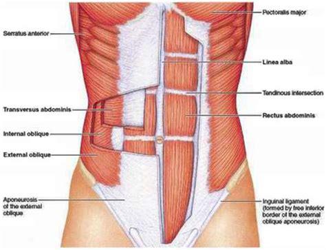 ab exercises  men women  abdominal