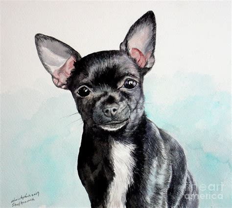 black and chihuahua puppies 50 most adorable black chihuahua photos and images